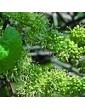 Réva vinná / Vine (32), 10 ml - Bachovy květové bio esence